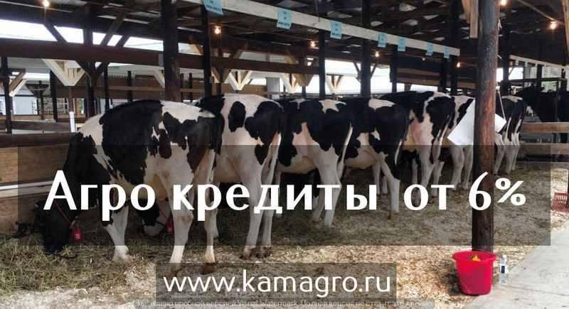 средней толщины цены на коров в казахстане молочные физической