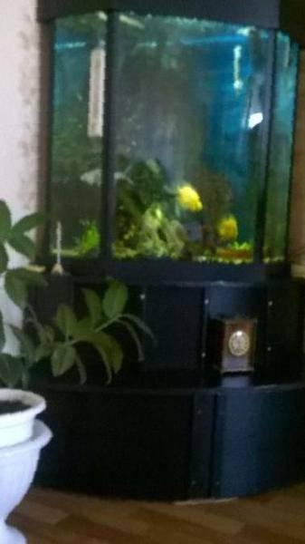Как избавиться от меланий в аквариуме