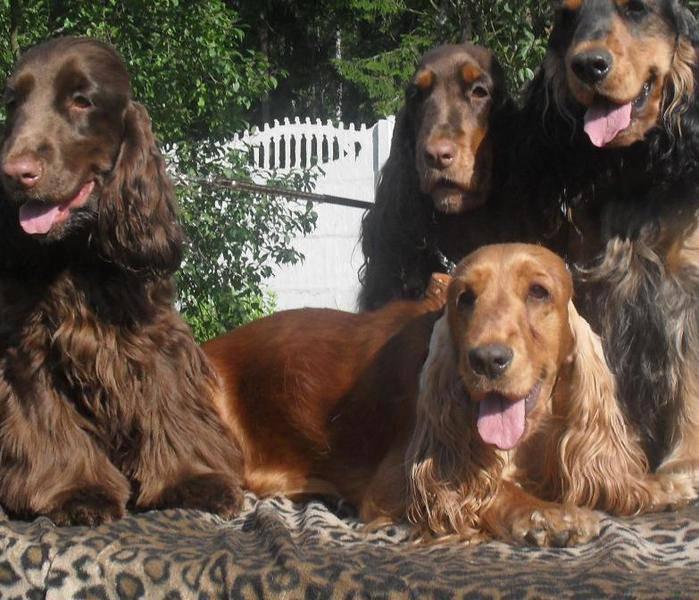 Дрессировка собак в кисловодске